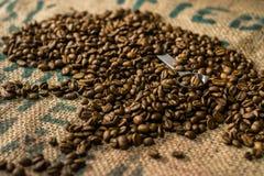 Chicchi di caffè arrostiti con un cucchiaio nel fratempo Immagini Stock Libere da Diritti