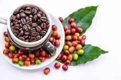 Chicchi di caffè arrostiti e chicchi di caffè maturi rossi Immagini Stock Libere da Diritti