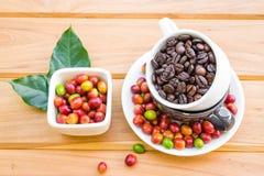 Chicchi di caffè arrostiti e chicchi di caffè maturi rossi Fotografia Stock