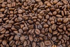 Chicchi di caffè come fondo Fotografia Stock Libera da Diritti