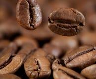 Chicchi di caffè di caduta a macroistruzione Immagine Stock
