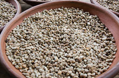 Chicchi di caffè di Luwak Fotografia Stock