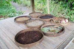 Chicchi di caffè di Luwak Immagine Stock