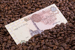 Chicchi di caffè e banconota egiziana Fotografia Stock