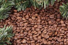 Chicchi di caffè e filiali dell'abete Fotografia Stock Libera da Diritti