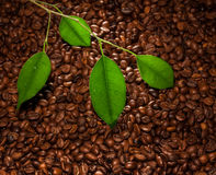 Chicchi di caffè e fogli Immagini Stock Libere da Diritti