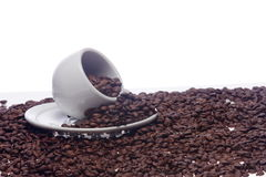 Chicchi di caffè e una tazza bianca Immagine Stock
