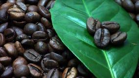 Chicchi di caffè Foglie della pianta del caffè (giri delicatamente) stock footage