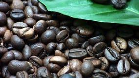 Chicchi di caffè Foglie della pianta del caffè (giri delicatamente) video d archivio