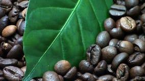 Chicchi di caffè Foglie della pianta del caffè (giri delicatamente) archivi video
