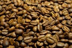 Chicchi di caffè freschi Fotografie Stock Libere da Diritti