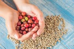 Chicchi di caffè freschi, chicchi di caffè rossi a disposizione Immagini Stock