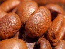 Chicchi di caffè a macroistruzione   Fotografia Stock Libera da Diritti