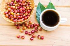 Chicchi di caffè maturi rossi Immagini Stock