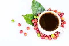 Chicchi di caffè maturi rossi Fotografie Stock
