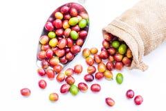 Chicchi di caffè maturi rossi Fotografia Stock Libera da Diritti