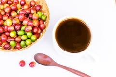 Chicchi di caffè maturi rossi Fotografie Stock Libere da Diritti