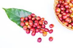 Chicchi di caffè maturi rossi Immagini Stock Libere da Diritti