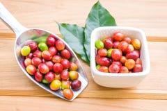 Chicchi di caffè maturi rossi con la foglia verde Fotografia Stock