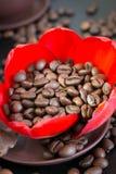 Chicchi di caffè nel fiore di rosso del germoglio Immagine Stock