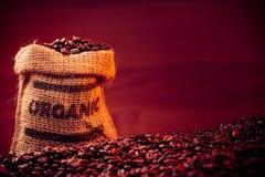 Chicchi di caffè organici Immagini Stock