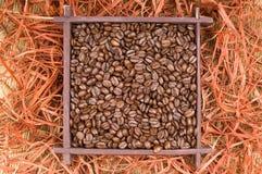 Chicchi di caffè, primo piano a macroistruzione Fotografia Stock