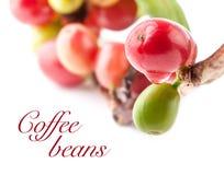 Chicchi di caffè rossi Fotografie Stock Libere da Diritti