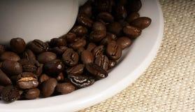 Chicchi di caffè rotondi Immagini Stock