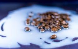 Chicchi di caffè rovesciati su latte immagine stock
