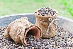 Chicchi di caffè in sacco della tela di canapa Fotografie Stock Libere da Diritti
