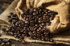 Chicchi di caffè scuri organici Fotografia Stock
