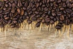 Chicchi di caffè su tela da imballaggio e su legno Immagini Stock
