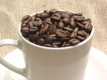 Chicchi di caffè in tazza Fotografie Stock