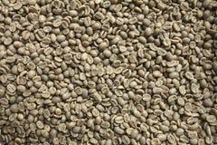 Chicchi di caffè verdi Immagine Stock