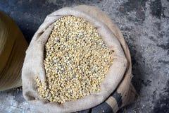 chicchi di caff? secchi Pronto--arrosto in borse su una piantagione di caff? in Costa Rica immagini stock