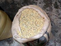 chicchi di caff? secchi Pronto--arrosto in borse su una piantagione di caff? in Costa Rica immagine stock libera da diritti