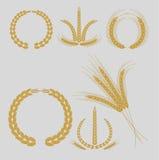 Chicchi di grano ed orecchie Fotografie Stock