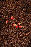 Chicchi e bacca di caffè fotografie stock libere da diritti