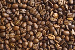 Chicco di caffè 02 Fotografia Stock