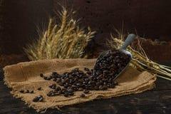 Chicco di caffè arrostito che si purifica dal cucchiaio immagine stock libera da diritti