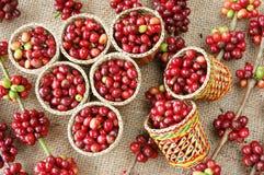 Chicco di caffè fresco rosso Fotografia Stock Libera da Diritti