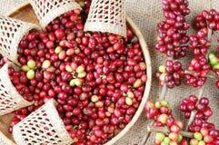Chicco di caffè fresco rosso Immagine Stock