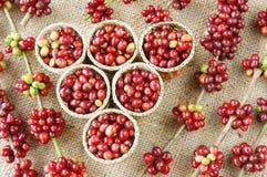 Chicco di caffè fresco rosso Fotografia Stock