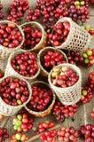 Chicco di caffè fresco rosso Fotografie Stock Libere da Diritti