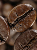 Chicco di caffè in ombre profonde Fotografia Stock