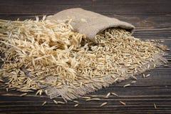 Chicco di grano dell'avena Immagini Stock