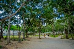 CHICHEN ITZA, МЕКСИКА - 12-ОЕ НОЯБРЯ 2017: Неопознанные люди идя на outdoors в лесе близко к Chichen Itza Стоковое Изображение RF