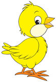 Chick. The clip-art of the small yellow chick vector illustration