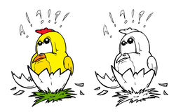 Chick. Little chick in two variants Stock Images