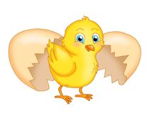 Chick. Illustration of a cute chick just gone out of the hull vector illustration